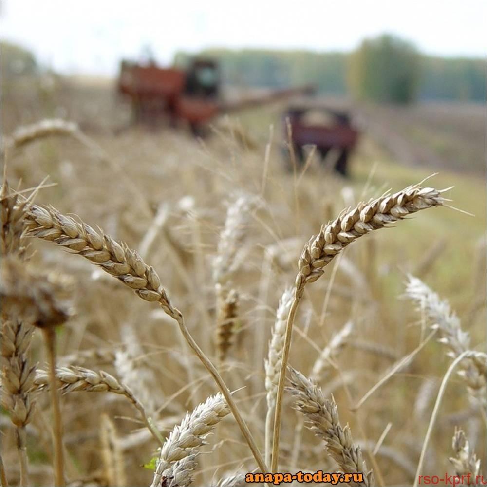 Колхозные будни